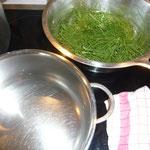 wasser zum kochen bringen und das sieb mit dem zinnkraut hinein geben