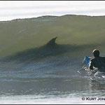 Quand on ne se méfie pas assez des requins de la finance... ils aiment aussi  le liquide...