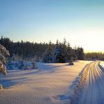 Verschneiter Oberpfälzer Wald