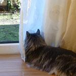 Auch Lyo ist gut getarnt und fällt kaum auf hinter der Gardine....