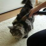 Eine sehr reinliche Katze....