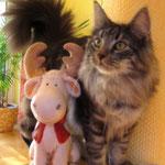 Weihnachten mit Katze und Rentier