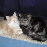Katzen in love