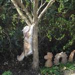 .....und am Baum hängen meine Zweite!