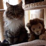 Jeannie, der kleine Löwe für den Hausgebrauch