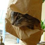 Bashyra liebt Tüten über alles und wenn man nicht aufpasst, nimmt man sie mit zum Einkaufen!