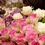 """Rose """"Malibu"""""""