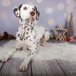 Sk Ch. Somora´s Juniper Dream LUA (N/hu) Fotoshooting mit Anja Ellinger...08.12.2018