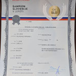 Slowenischer Champion Somora´s Juniper Dream N/hu Titel erhalten am 20.01.2019