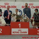 Unglaubliches Ergebniss Somora´s Juniper Dream bekommt nach dem Excellent V 1 CAC CACIB BOB auch noch das BOG 2 auf der Expo Internationale Di Reggio Emilia am 18.03.2018 wir sind unendlich stolz