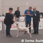 Excelent V 2 Res. CAC Res. CACIB Somora´s Juniper Dream auf der Expo Internationale Di Piacenza...16.03.2018