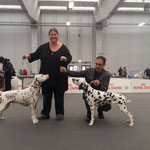 Excellent V 1 CAC CACIB BOB Somora´s Juniper Dream und Excellent V 1 BOS Dalticino Sainte Devote auf der Expo Internationale Di Reggio Emilia am 18.03.2018