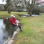 Vor lauter Golfeifer übersieht er den Alligator!