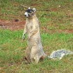 hi guys have fun! (FoX Squirrel)