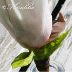 Sugar Magnolia by Floralilie