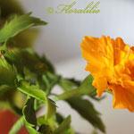 Gumpaste Tagetes by Floralilie