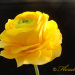 Ranunculus made of gumpaste by Floralilie