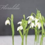 Gumpaste Snowdrops by Floralilie