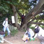 ターザンの木(スダジイ)でどんぐり拾い