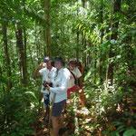 Adentrados en la selva