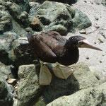 Aves en el parque Nacional