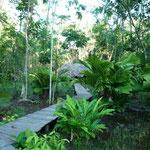 El campamento en medio de la selva