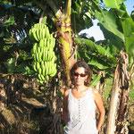 Muchas plantaciones de plátanos