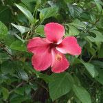 La vegetación en la Isla de Ometepe es impresionante