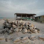 Botutos acumulados en la playa