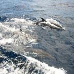 Los delfines no podían faltar