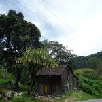 Boquete, área del Bajo Mono