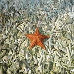 Los restos de coral y las preciosas estrellas de mar