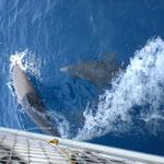 Navegación a San Blas con delfines