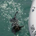 Rufino, muy obediente, nadando desde el Bahía al Cap's cuando su dueño lo llamó