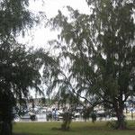 Los alrededores del puerto