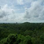 Panorámica de Tikal desde lo alto de la pirámide IV