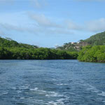 Los manglares de Tyrrel Bay