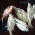 Nuestra pesca a fondo