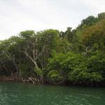 Los manglares de Green Island