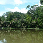 Alrededores de Parque Nacional Tortuguero