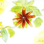 「高原で見つけた花」2012年水彩
