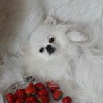 нежа-Снежная Королева от Панды Шарм