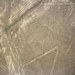 Nazca Spinne