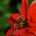 Bienen machen was.