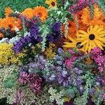 Wunderschöne Heilpflanzen