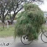 Mit zuviel Gras den Durchblick verloren
