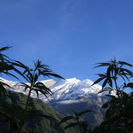 Cannabis in Nepal
