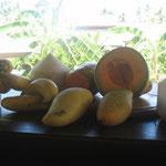 Kokos, Papaya, Banane, Melone, Mango Mavera