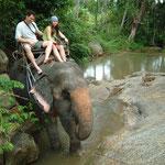 Elefanten sind geachtete Tiere