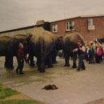Als 1984 die Bahnstrecke Esens-Dornum stillgelegt wurde, musste kurzzeitig eine Elefanten-Karawane einspringen und für die Belieferung mit Düngemitteln sorgen:)